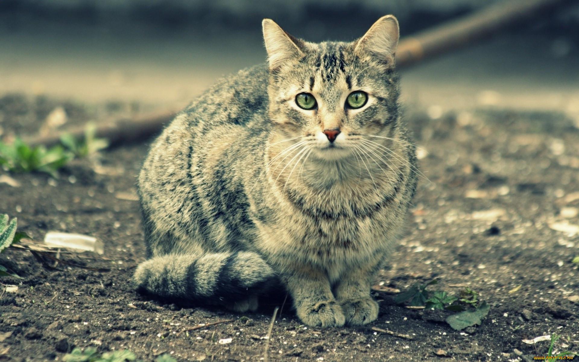 как картинки котов большого разрешения огонь